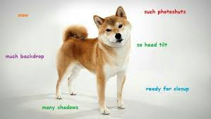 What Is Doge Meme - daily doge meme 8 doge nation amino