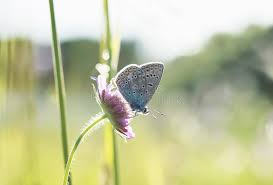 small blue butterfly sits on a flower amid the bright grass in stock