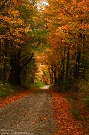 Why Fall Is The Best Season by Why Leaves Fall From Trees In Autumn The National Wildlife