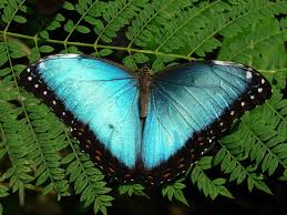 Blue And Green Butterfly - blue in a sea of green exhibits