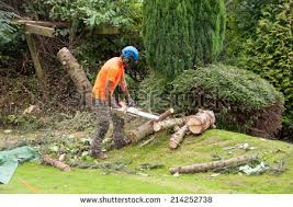 tree cutting stock images royalty free images vectors