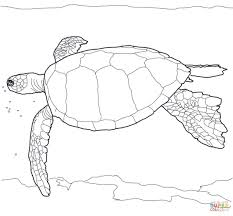 hawaiian green sea turtle coloring page free printable coloring