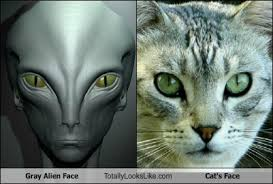 Cat Alien Meme - gray alien face totally looks like cat s face totally looks like