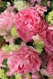 big pink peonies in a wedding flower arrangement stock photo