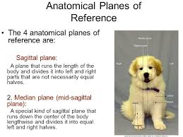 Dog Body Parts Anatomy Introduction To Anatomy U0026 Physiology Ppt Video Online Download