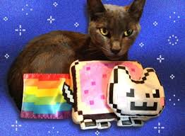 Tout De Meme - marty était le nyan cat chalut l artiste libération