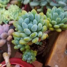 26 best succulent garden ideas around the world succulent