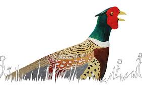 Backyard Pheasants The Ring Necked Pheasant Has Seen Serious Habitat Loss Audubon