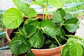 indoor herb garden kits to grow herbs indoors hgtv organic gardening growing herbs inside indoor herb pots herb