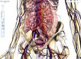 Google Human Anatomy Teach Your Students Anatomy With Google Body Browser U2014 Edgalaxy