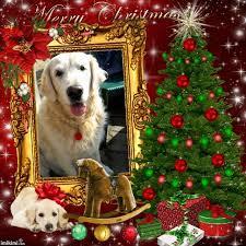 karácsonyi kutyás képek search karácsony