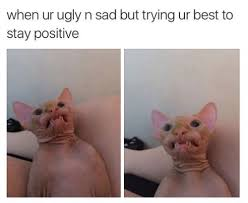 Ugly Cat Meme - lolcats ugly lol at funny cat memes funny cat pictures with
