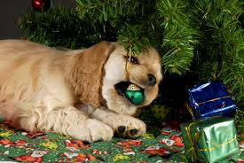 seasonal issues u2013 cold weather and holiday tips for pets u2013 green