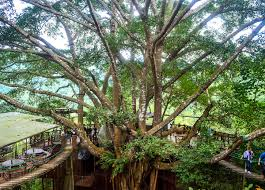 the tree house coffee shop in chiang mai and homestay
