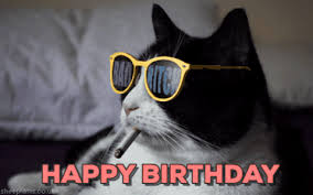 Happy Birthday Meme Gif - happy birthday cat gif find share on giphy