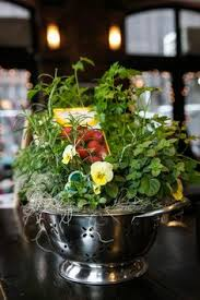 kitchen themed bridal shower decorate with potted herbs which