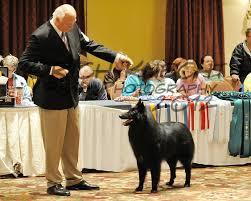 belgian sheepdog club of america national specialty heike wehrle richk