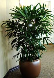 waltham ma interior landscaping and office plants