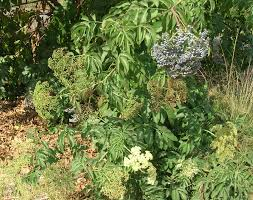 native plants of new jersey why do people not grow native plants u2013 part 2 the granada