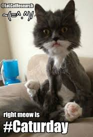 Caturday Meme - caturday is right meow meme pic lol cat research