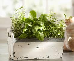 Window Sill Herb Garden Designs Staggering Herb Garden Kit Herb Garden Kit All You Need To Know