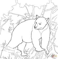 american black bears coloring pages kermode bear pictures of polar
