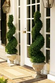 swirl topiaries must for my front porch container