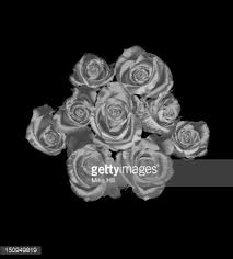 silver roses silver roses on a black background stock photo getty images