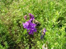 edible landscaping fall garden cover crops garden org