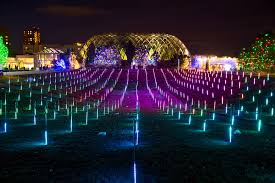 trail of lights chatfield coupon blossoms of light denver botanic gardens
