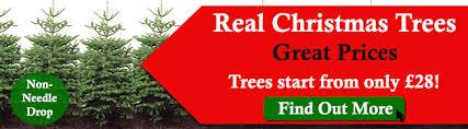 christmas tree prices the christmas area at sapcote garden centre