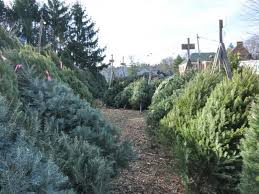 where to get a christmas tree westlake oh patch