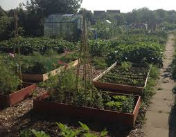 Garden Allotment Ideas Help We Ve Got An Allotment Allotment Allotment Ideas And Gardens