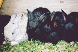 a guide to keeping rabbits as pets