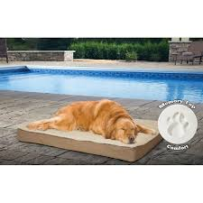 Dog Beds With Cover Furhaven Deluxe Outdoor Memory Foam Dog Bed With Removable Cover