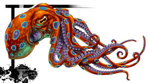 Octopus Tattoo Ideas Latest Grey Octopus Tattoo Design Photos Pictures And Sketches