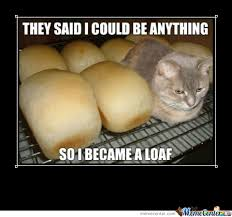 Cat In Bread Meme - bread cat by toxicnova24 meme center