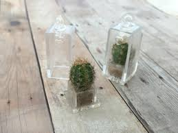living barrel cactus terrarium necklace pendant plant square