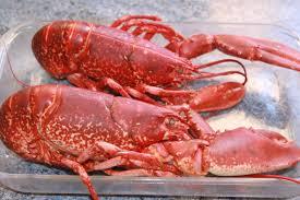 cuisiner un homard vivant cuire un homard la cuisine de gérald
