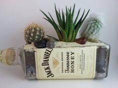 Wine Bottle Planters by Succulent Planter Jack Daniels Bottle House Plants Pinterest
