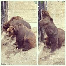 best 25 zoo lights tickets ideas on pinterest zoos in ohio