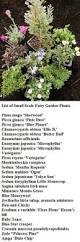 fairy gardening plants flowerland fairy garden pinterest