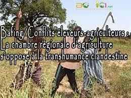 chambre r馮ionale d agriculture bafing conflits éleveurs agriculteurs la chambre régionale d