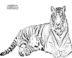 tiger cat printable coloring pages