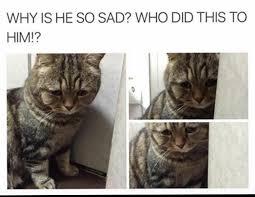 Sad Cat Meme - sad cat meme by stinkylexi memedroid