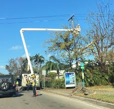 fpl street light program coconut grove grapevine should fpl and cable companies be sued