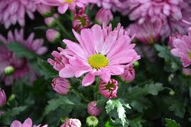 pink bouquet free photo flower flower color pink bouquet free image on