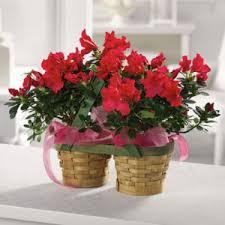 Ashland Flowers - spring flowers cheatham county florist ashland city tn 37015