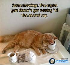 Funny Coffee Memes - funny cat meme coffee in the morning pics images photos pictures
