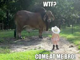 Come At Me Meme - come at me bro fisticuffs meme by dragonix18 memedroid
